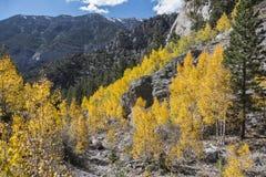Nevada Aspens Royalty Free Stock Image
