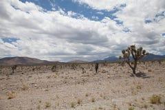 Nevada Desert med berg arkivbilder