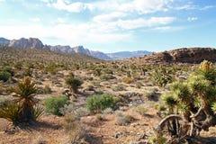 Nevada desert Royalty Free Stock Photos