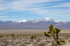 The Nevada Desert. A Nevada desert landscape with a joshua tree in the foreground and snowcapped mountains in the distance stock photography