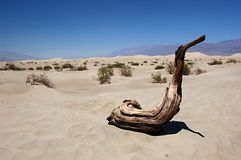 Nevada desert. Piece of wood in the desert in Nevada Royalty Free Stock Photo