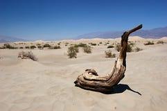 Nevada desert Royalty Free Stock Photo