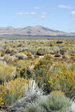 Nevada Desert Scenic. A scenic view of the U.S. state of Nevada with desert scrub and rolling hills royalty free stock photography