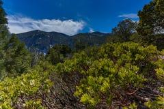 Nevada Mountains, los E.E.U.U. imagenes de archivo