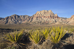 Nevada Sandstone and Yuccas Stock Photography
