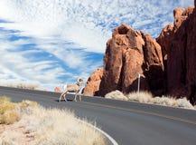Nevada State Park: Dal av brand Gambel'sens vaktel (Callipep Royaltyfri Foto