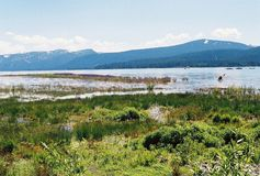 Nevada tło gór jezioro tahoe fotografia stock