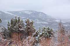 Nevada USA spring snow in the mountains Royalty Free Stock Photography