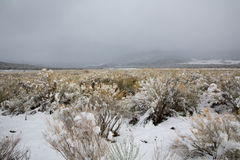 Nevada USA spring snow in the mountains Stock Photography