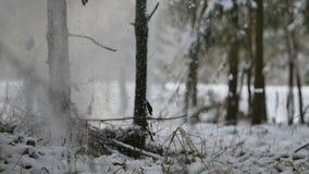 Nevadas del árbol a la tierra en bosque en el invierno en slowmo almacen de metraje de vídeo
