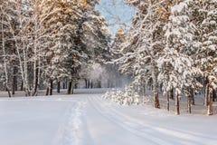Nevadas del invierno de la nieve del bosque Imágenes de archivo libres de regalías