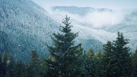 Nevadas en árboles cerca de Misty Mountains almacen de video