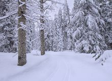 Nevadas en bosque del invierno fotografía de archivo libre de regalías