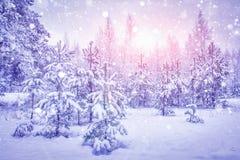 Nevadas en bosque del invierno en la salida del sol brillante Copos de nieve que brillan en luz del sol sobre los árboles de navi imagen de archivo libre de regalías
