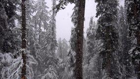 Nevadas en el bosque almacen de video