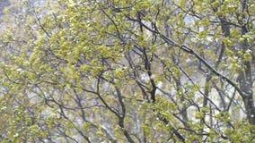 Nevadas en el follaje de los árboles almacen de video