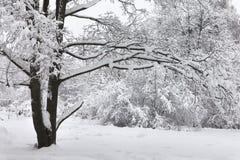 Nevadas en el parque, paisaje grande nevado del árbol Concepto hermoso del tiempo del invierno Fotografía de archivo libre de regalías