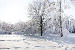 Nevadas en el parque, paisaje grande nevado del árbol Concepto hermoso del tiempo del invierno Fotos de archivo