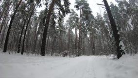 Nevadas en la carretera nacional del bosque del invierno en nieve acumulada por la ventisca almacen de video