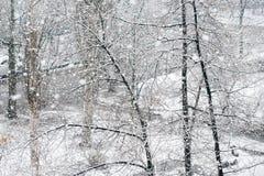 Nevadas en parque del invierno Fotos de archivo libres de regalías