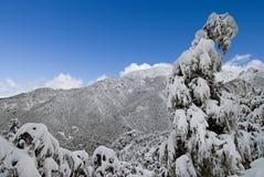 Nevadas fortes aglutinadas em árvores, cumes do sul, Nova Zelândia fotografia de stock