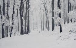 Nevadas fortes nas madeiras no inverno Fotos de Stock