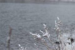 Nevadas frescas en Minnesota septentrional foto de archivo