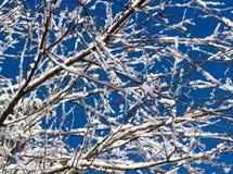 Nevadas hivernales en ramificaciones de árbol Fotos de archivo libres de regalías