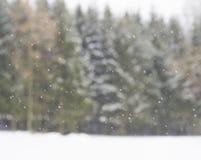 Nevadas más forrest borrosas b del fondo del árbol de la picea del invierno que nievan Imágenes de archivo libres de regalías