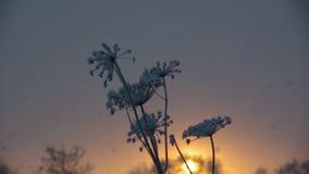 nevadas Paisaje del invierno almacen de video