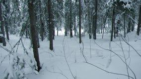 nevadas Paisaje del invierno almacen de metraje de vídeo