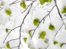 Nevadas súbitas de la primavera fotos de archivo libres de regalías