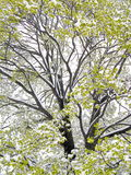 Nevadas súbitas de la primavera Imagenes de archivo