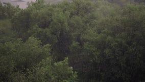 Nevadas y fuertes lluvias en verano En fondo son los árboles verdes, hierba, trayectoria metrajes