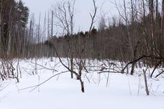 Nevado aclara paisaje del invierno con un tronco de árbol muerto caido Imagen de archivo