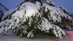Nevado arbusto Imágenes de archivo libres de regalías