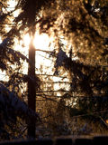 Nevado Branches1 Imagen de archivo