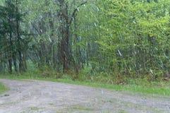 Nevado, chuva, tempo, mau, neve, inverno, tempestade, saraiva Fotografia de Stock