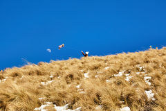 Nevado de toluca Xinantecatl风筝和月亮 库存图片
