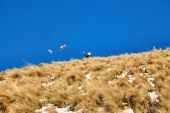 Nevado De Toluca Xinantecatl kania i księżyc obrazy stock