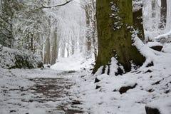 Nevado Forest Floor Imagen de archivo libre de regalías