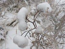 Nevado, Natal, parque, fundo, bonito, branco, estação, frio, neve, natureza, inverno Imagens de Stock