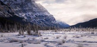 Nevado paisaje de Alberta, Canadá fotografía de archivo