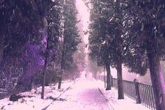 Nevando na cidade de Verona, Itália Fotos de Stock Royalty Free