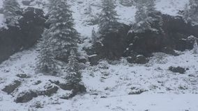 Nevar da neve coberto na árvore alpina no auge da montanha video estoque