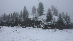 Nevar da neve coberto na árvore alpina no auge da montanha filme
