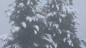 Nevar da neve coberto na árvore alpina no auge da montanha video estoque