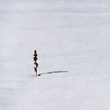 A neve é grama seca. Fotografia de Stock Royalty Free