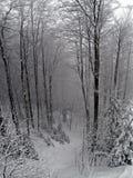 Neve Fotografia Stock Libera da Diritti