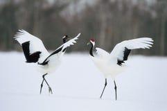 Neve abaixo dos pássaros Imagem de Stock
